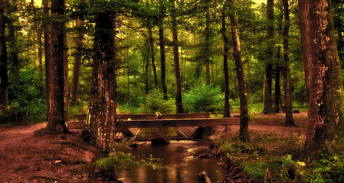 forest_stream
